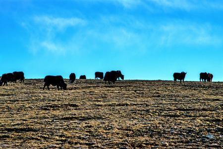 tibet: Prairie in Tibet