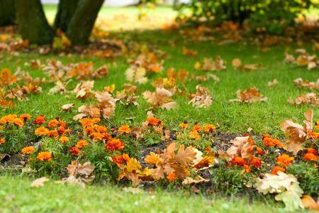 massif de fleurs: De fleurs dans un parc � l'automne.