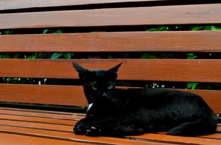 black cat sleep Stock Photo - 7711821