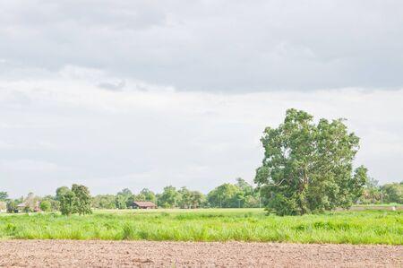 jokul: grassland and sky
