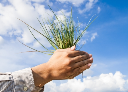 person holds a bunch of young grass on blue sky  photo