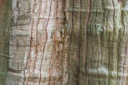 wood texture Stock Photo - 14814054