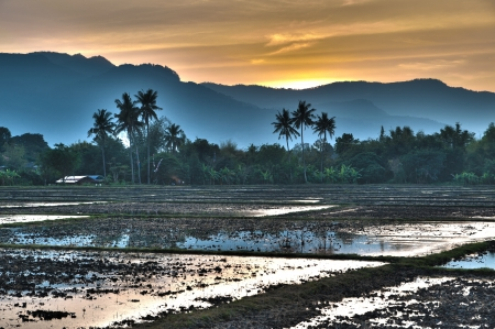 Sunset at Paddy campo na Tailândia