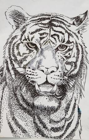 craftsmanship: original pencil or drawing working sketch of tiger