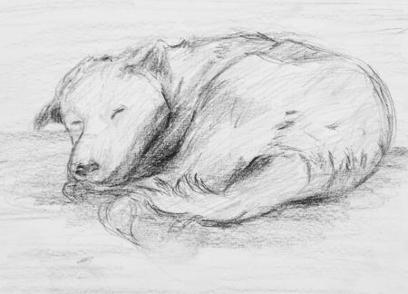 cuddled: Pencil Drawing of dog Sleeping