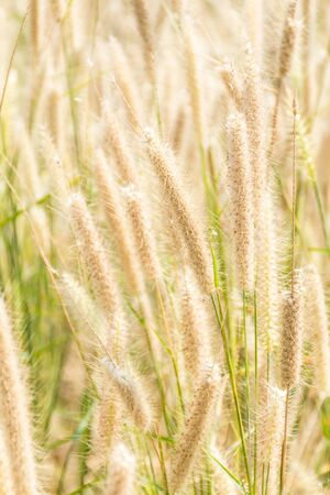 grass flower background with sunset light