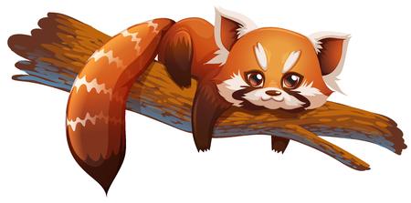 bearcat: red panda cute vector illustration