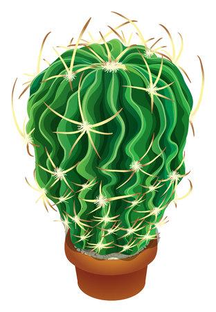 plant pot: Realistic cactus and Succulent plant in pot