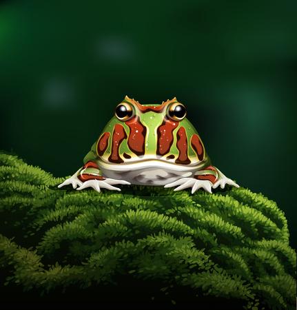 webfoot: horned frog realistic illustration Illustration