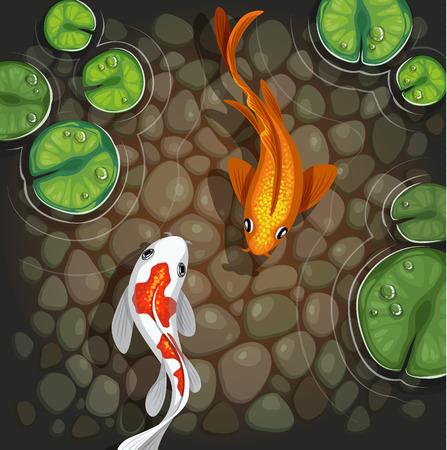 koi pond: Carp koi fish underwater pond illustration Illustration