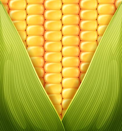 sweet corn texture pattern illustration Иллюстрация