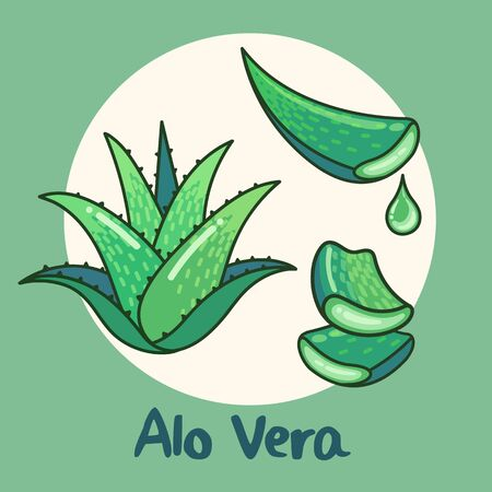 Aloe vera plant vector flat design illustration