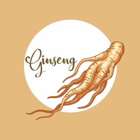 Vector Illustration of Ginseng. A root of cultivated Korean ginseng. Food ingredients used for traditional Chinese medicine.