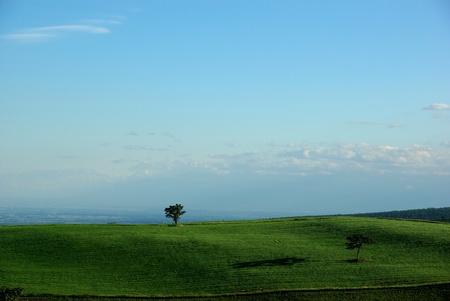 trees on the field in Hokkaido, Japan Stock Photo - 12990035