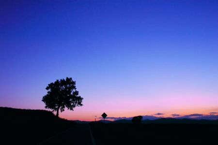 a tree and a traffic sign at twilight photo