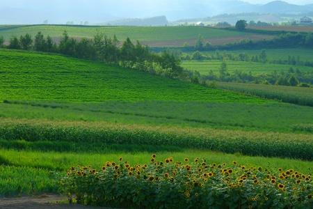 biei: the fields in Biei, Hokkaido, Japan Stock Photo