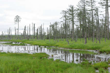trees in the wetland