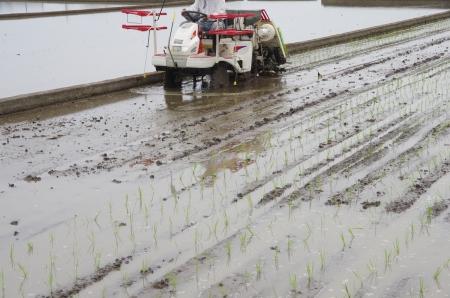 rice planting by machine photo