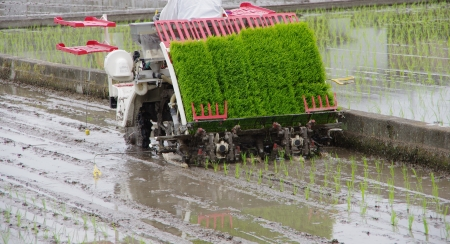 rice planting by machine