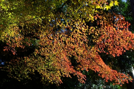 red, yellow and green leaves in autumn Stock Photo - 15220923