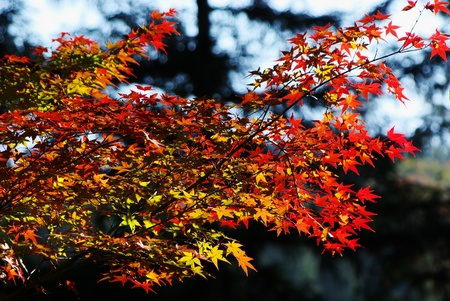 red, yellow and green leaves in autumn Stock Photo - 15220922