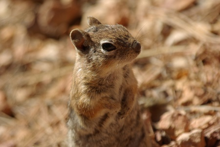 squirrel in Bryce Canyon Stock Photo