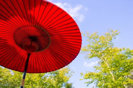 Japanese red paper parasol and maple leaves photo
