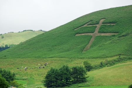 cow in kanji character on the hill Stock Photo - 16930550