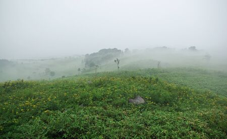 field covered with fog