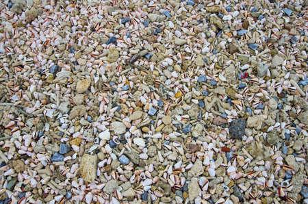 cone shells and dead coral