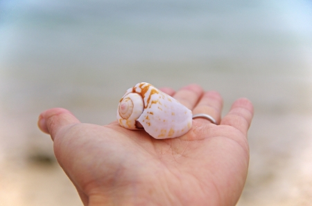 seashell on a palm Stock Photo - 17340013