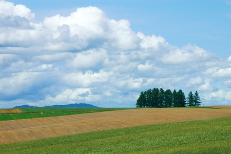 view from Sanai no Oka in Hokkaido in summer