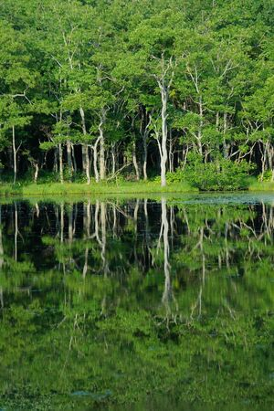 reflection of trees in a lake  Shiretoko in Hokkaido, Japan  Stock Photo - 17948849