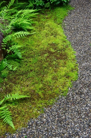mosses, ferns and fine stones in a Japanese garden