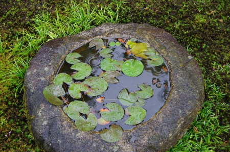 mondo: a stone bowl with water lilies in a Japanese garden