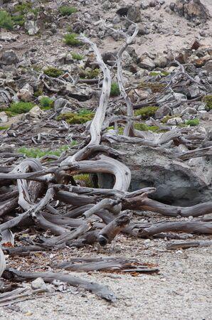 sapless: alberi morti