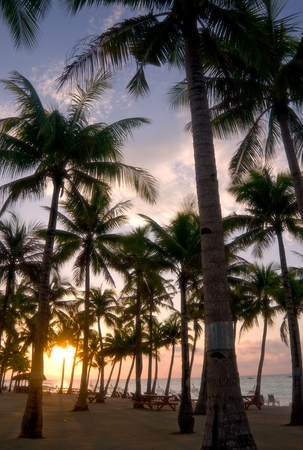 tropical beach at sunrise