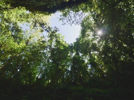 木を見上げる 写真素材 - 85249956