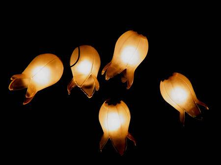 campanula: The lamp of campanula