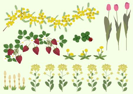 ミモザの花と春の植物材料コレクション。  イラスト・ベクター素材