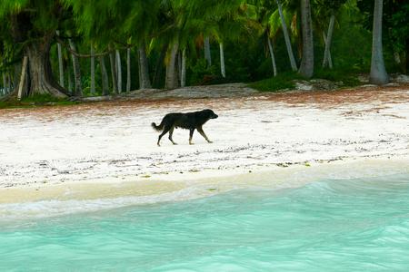 Bora Bora Island dog