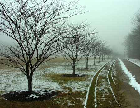 Tire tracks along a row of trees in winter fog. photo