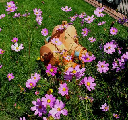 Fire hydrant and flowers Reklamní fotografie