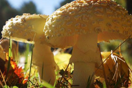 Mushrooms up closeup. 스톡 콘텐츠