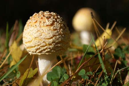 Mushrooms up closeup. Imagens