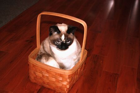 A cat sitting in a basket on a hardwood floor, Stock Photo - 12974292