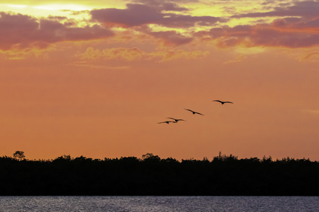 Pink Sunset with Flying Ibis