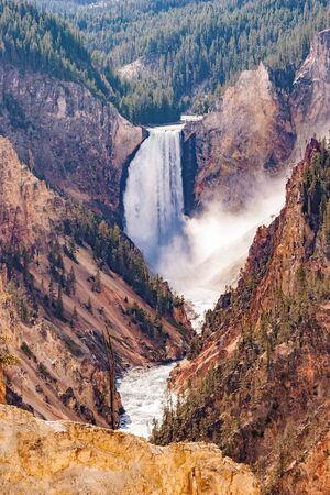 lower yellowstone falls: Lower Falls Yellowstone