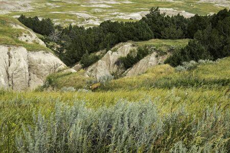 mule deer: Badlands Meadow with a Mule Deer