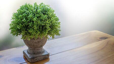garden green: The garden green of decord